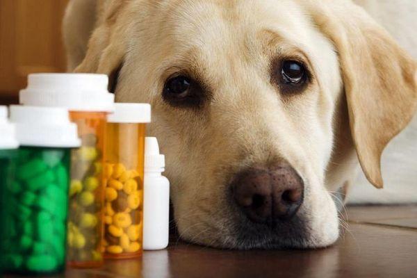 Вітаміни для собак