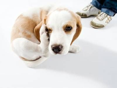 Vlažožrúti u psov s vlnou: príznaky a liečba