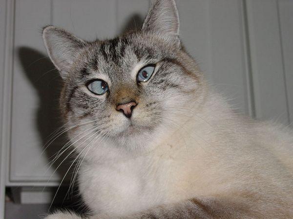 Кішки і валерианка