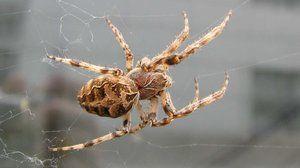 Vonkajšia štruktúra pavúka. Špeciálne schopnosti prežiť