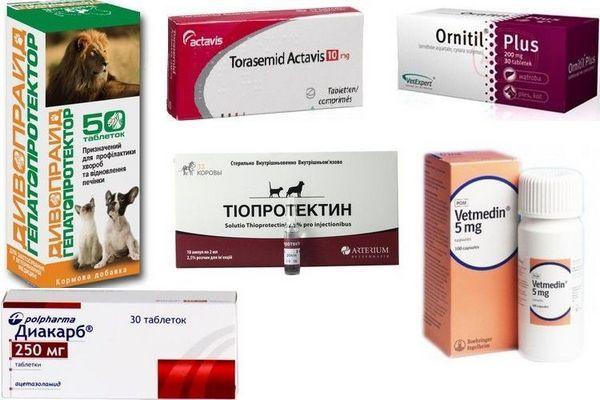 Препарати для лікування водянки (асциту) у собак