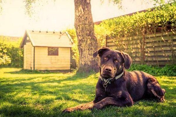 Підбирайте вольєр і будку в ньому виходячи з розмірів собаки
