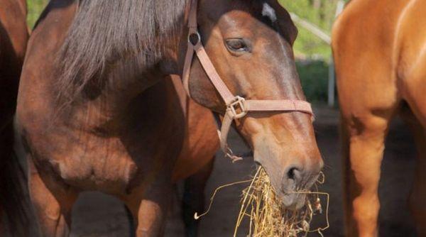 харчування коні