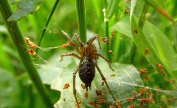 Bludisko pavúk