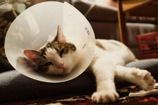 Направи нашийник за котки