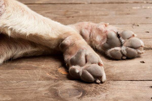 Віск для захисту лап собаки