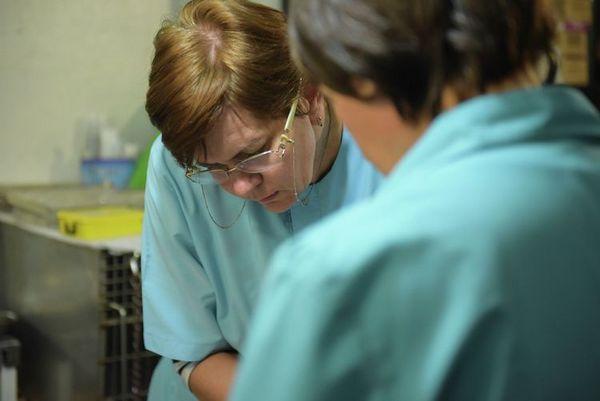 Ветеринари в клініці