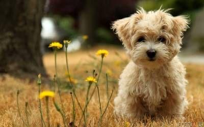 Možné komplikácie po sterilizácii psov