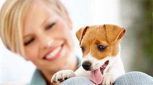 Вік собаки за людськими мірками