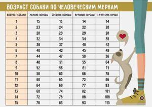 Таблиця для визначення віку собаки
