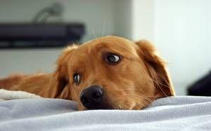 Для чого необхідно знати вік собаки