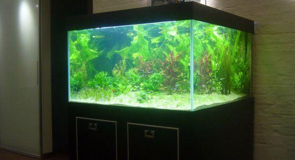 скляний акваріум