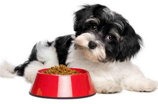 Собака їсть корм