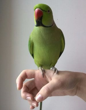 Цялото забавление на папагалите