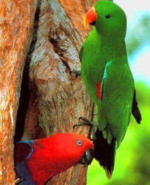 Най-важното за запазването на благородни папагали у дома