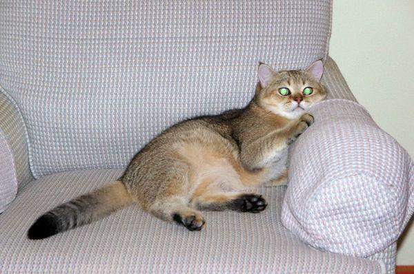 Кішка дивиться телевізор