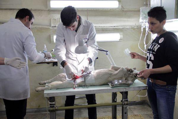 Цялата истина за стерилизацията на кучета