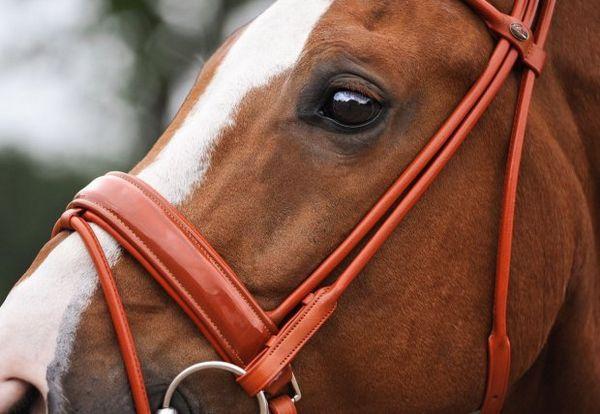 Вуздечка для коня