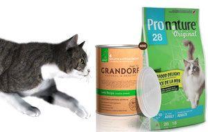 Який корм вибрати для своєї кішки