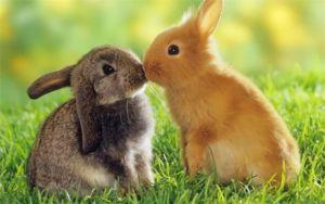 Všetko o rozdiele medzi zajacom a králikom