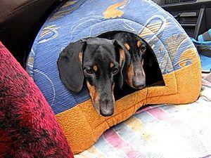 Види будиночків для собаки