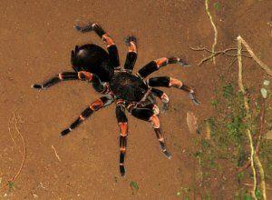 Всичко най-важно и интересно за тарантулите