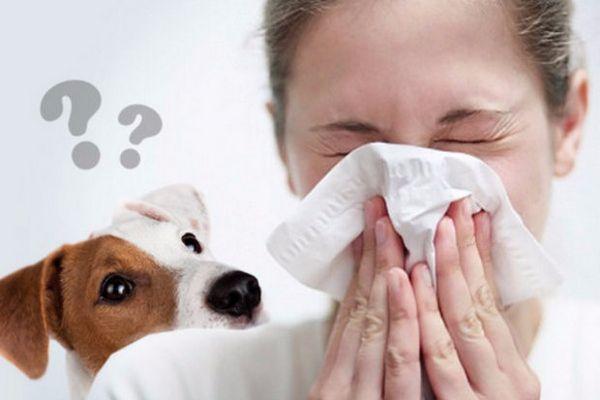 Які собаки краще і алергенні чинники