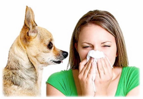 Що робити, якщо виникла алергія на собаку