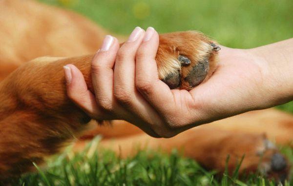 Як вибрати гіпоалергенну собаку