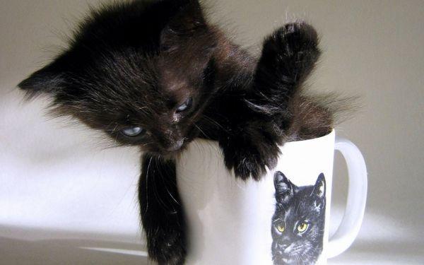 Як назвати чорне кошеня дівчинку