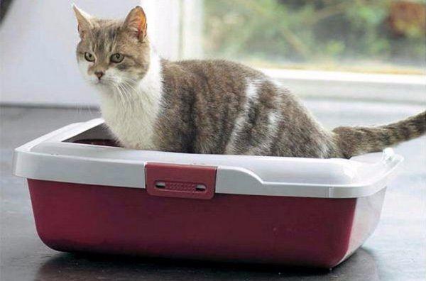 podstielka pre mačky