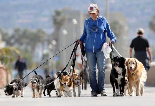 тривалість прогулянки з собакою