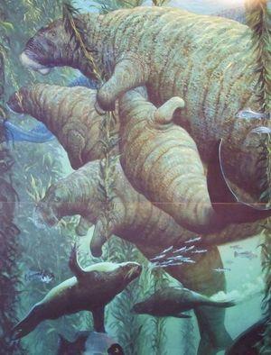 Морська корова гідрадамаліс Куеста
