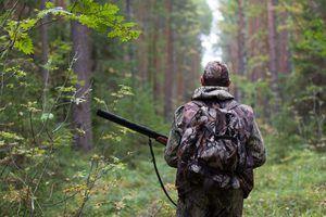Активна полювання і, особливо, браконьєрство скорочують число тварин