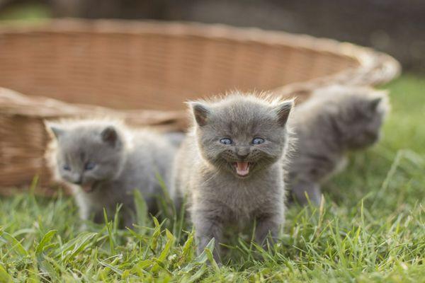 V akom veku menia mačky zuby