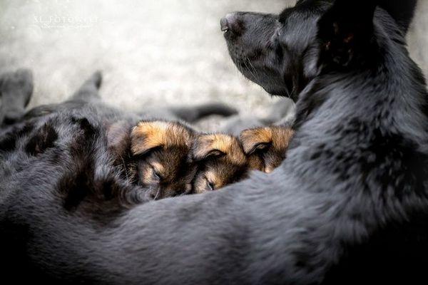 Собак і новонароджені цуценята