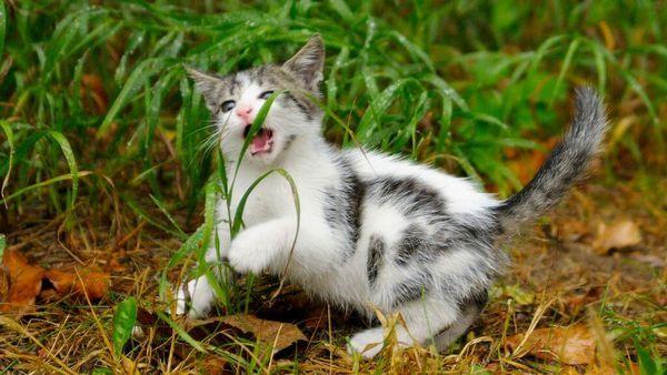 Зелень необхідна тварині для травлення