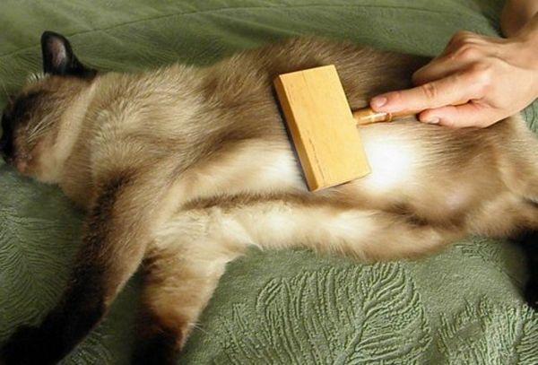 вичісування кота