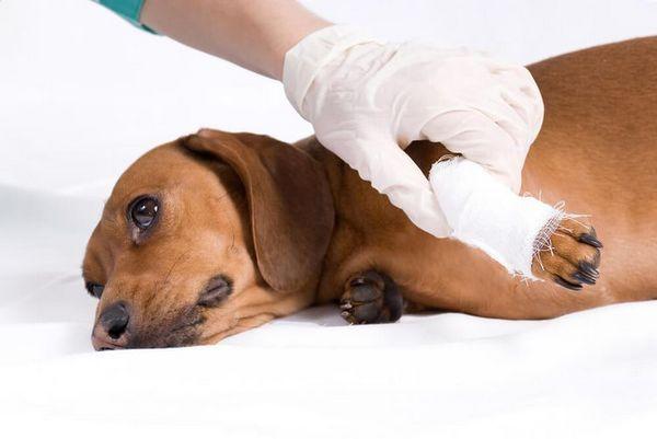 Розтягування лапи у собаки