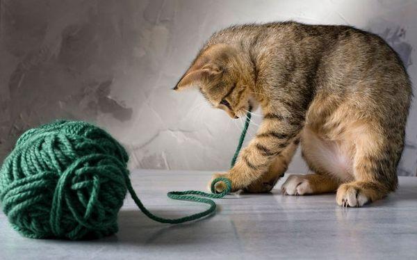 Кошеня грає з клубком