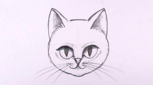 Намальована олівцем морда кішки