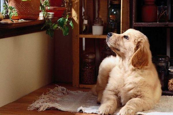 Закон за грижа за кучетата