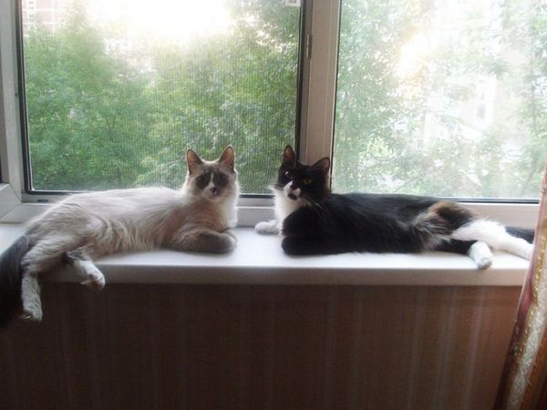 Защита на котешки прозорци