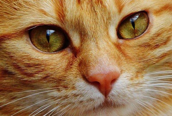Тумор при котки: симптоми и лечение