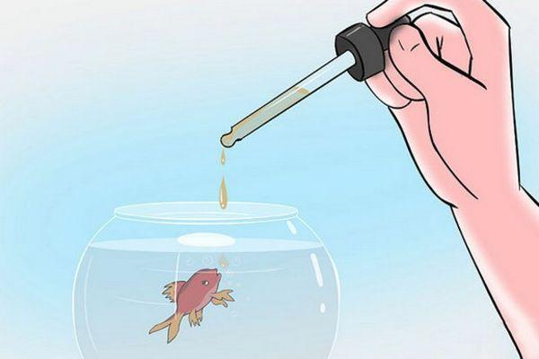 Годування рибок живим пилом
