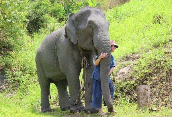Slon s človekom