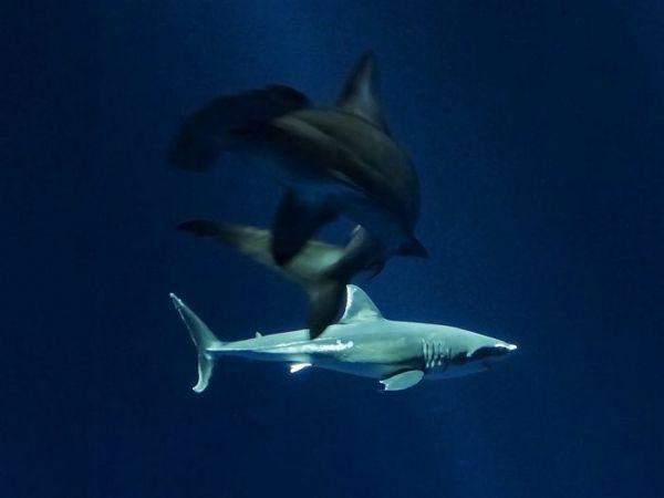 Dva žraloky
