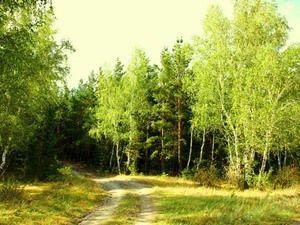 Listnaté lesy - domov medených hláv