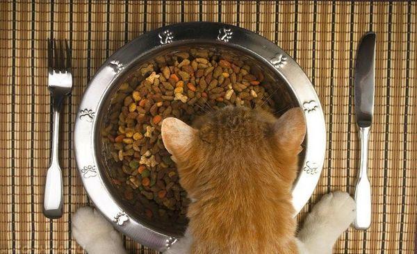 Пепел в храната за котки