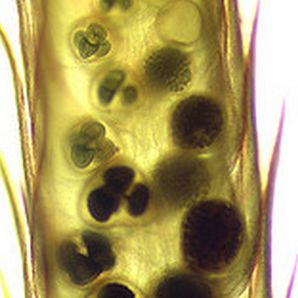 Зооантропонични заболявания: част трета. Гъбични заболявания, предавани на хората от животни